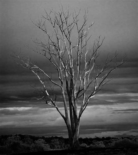 imagenes de arboles invierno ramas de los 225 rboles de invierno extremidades muerto oto 241 o