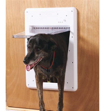 Doggie Door Doggy Door Amp Amazon Com Plexidor Performance Pet Doors