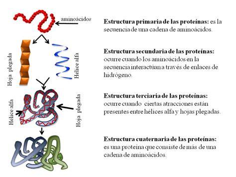 proteinas y su estructura las prote 237 nas y el c 243 digo 233 tico