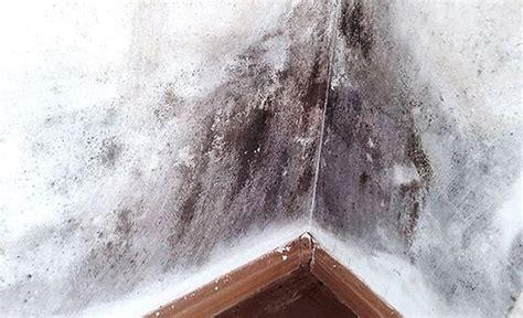 Feuchtigkeit In Der Wand Entfernen by Anti Schimmel Farbe Schimmel Entfernen Jaeger