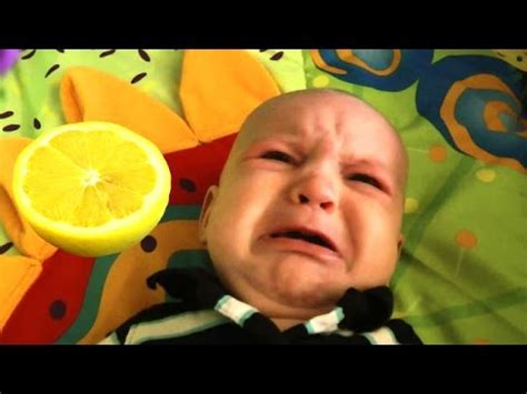 eats lemon baby eats lemon a babies lemons for the time compilation 2016 new hd