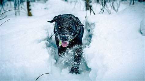 can dogs get colds from humans what temperature is cold for dogs dogs and advice