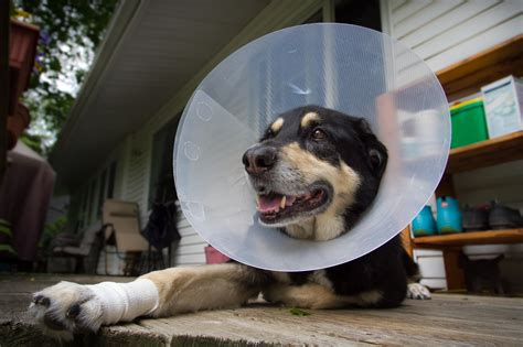 cone for dogs e collar alternatives 5 pet friendly substitutions for the cone of shame huffpost