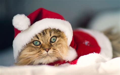 christmas pets hd wallpapers   tips  news  mobile devices