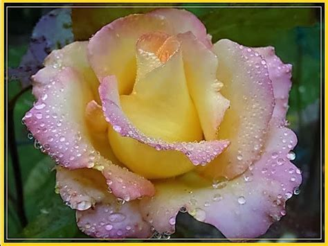 imagenes de flores exoticas para descargar imagenes de flores naturales