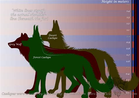 wolf size compared to grey wolf size compared to human