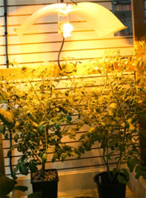 growing vegetables indoors  gateway gardener