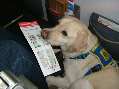 service dogs on planes summertime safety for your pet janet roper