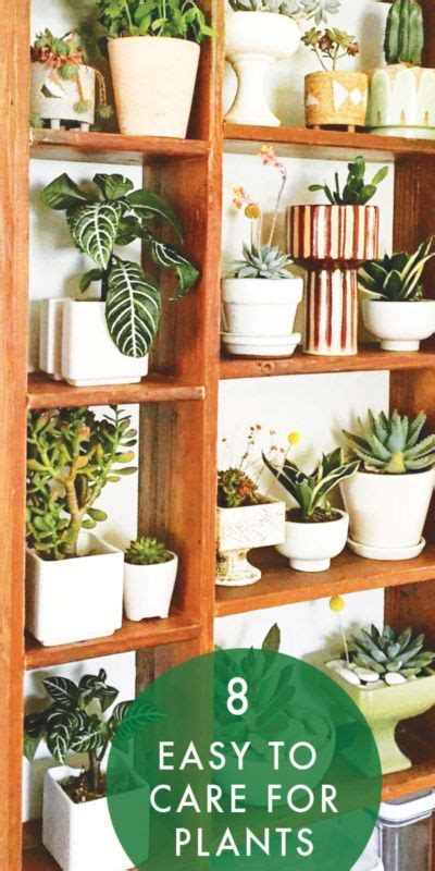 easy to care for indoor plants 133 best plants on pink images on pinterest green plants