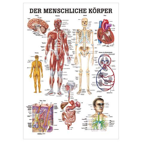 der menschliche körper innere organe k 246 rper anatomie organe