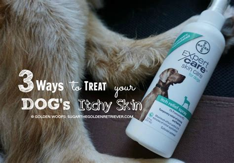 golden retriever itchy skin relief for your s itchy skin bayerexpertcare golden woofs