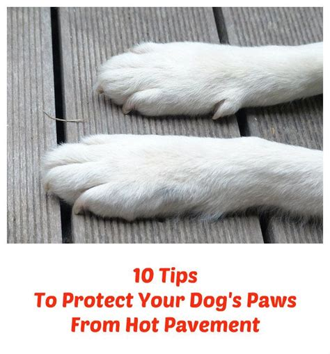 7 Tips To Not Be Protective To Your Children by 10 Tips To Protect Your S Paws From Pavement