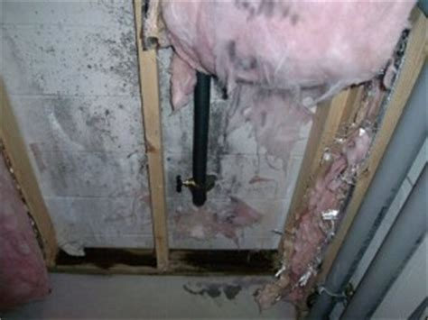 remove mold from basement smalltowndjs