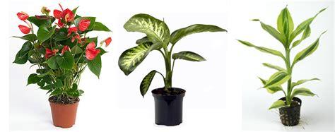 cuidado plantas interior plantas interior resistentes dise 241 os arquitect 243 nicos