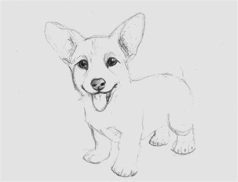 corgi puppy by wolfskinny on deviantart