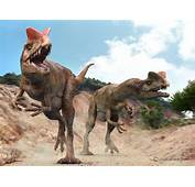 The 10 Dinosors You Would Never Like To Meet  NOTA