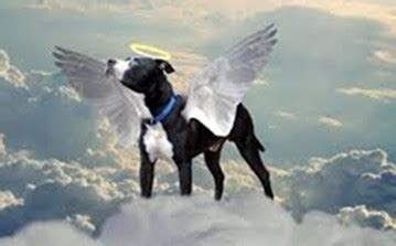 will i see my in heaven will i see my animal in heaven nancy marsh