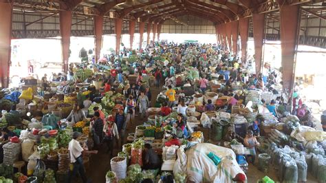 d fruit trading court halts eviction of farmers at benguet vegetable
