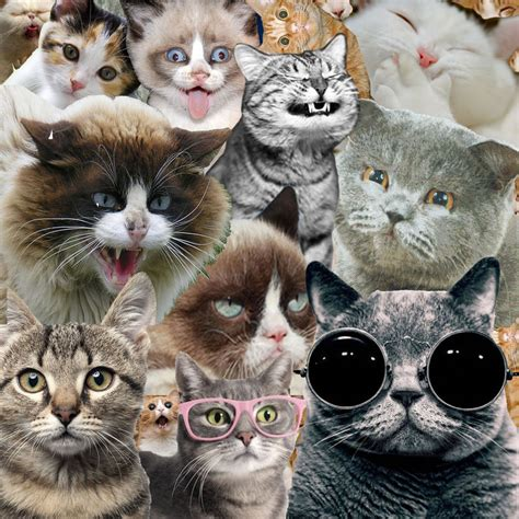 cat wallpaper collage cat collage by fraandarks on deviantart