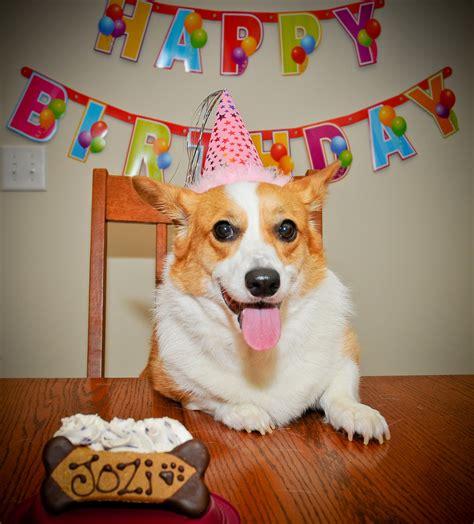 Corgi Birthday Meme - image gallery happy birthday corgi
