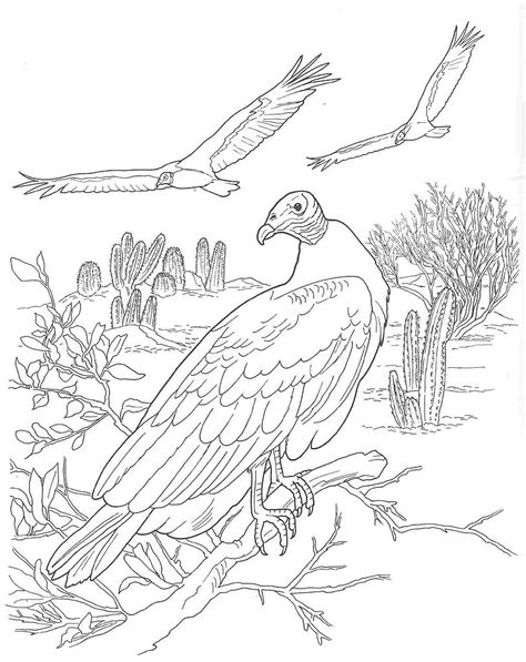 coloring pages desert animals the desert colouring pages