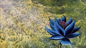Magic The Gathering Lotus Wallpapers Magic The Gathering