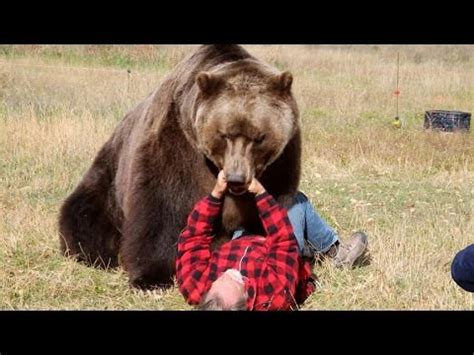 how do i my to attack vote no on grizzly attac