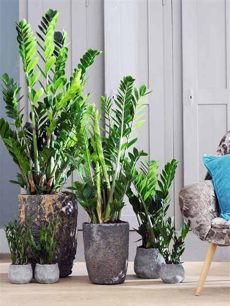 Délicieux Orchidee Jardin Des Plantes #1: perfecteplantenpot_mooiwatplantendoen_home.jpg