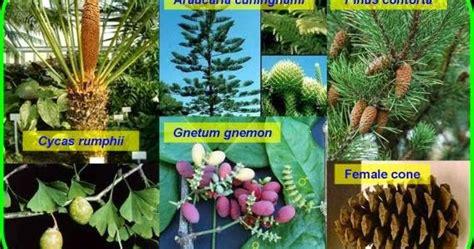 contoh tumbuhan berbiji terbuka  tertutup