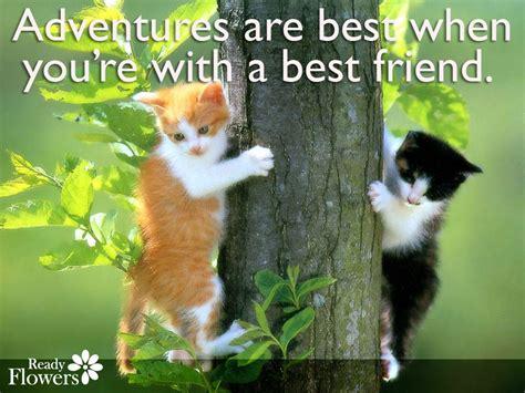 pets best friend pets quotes zflowers