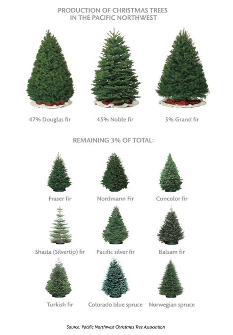 types of fir christmas trees images