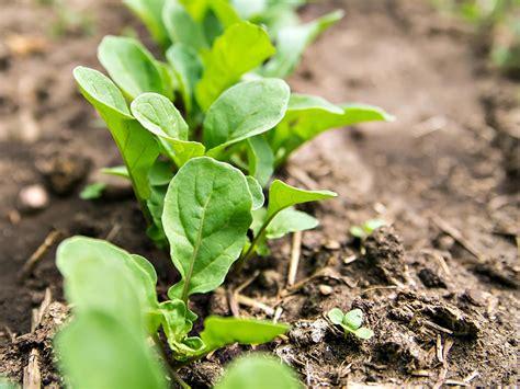 1510 gardening w eat tomorrow blog