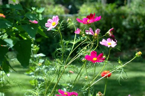 wildflower backyard diy wildflower garden live simply