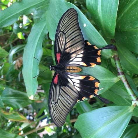 casa delle farfalle casa delle farfalle viaggi vacanze e turismo turisti