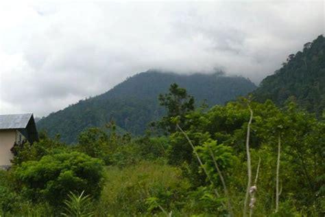 Cyclop Putih Jayapura cagar alam rusak mongabay co id