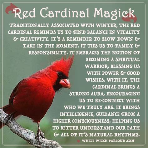 red cardinal symbolism bird animal totem spirit
