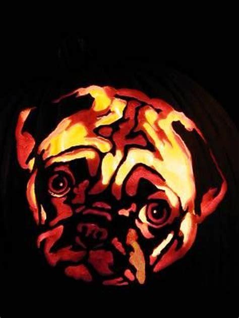 pug pumpkin pug pumpkin