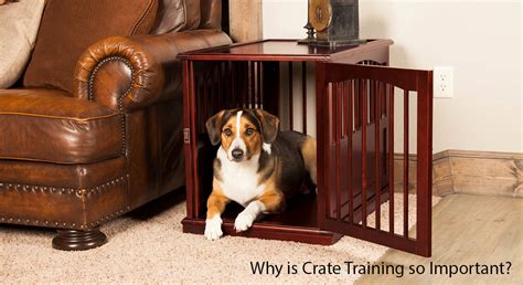 crate training crate training a puppy dog crate training tips dog
