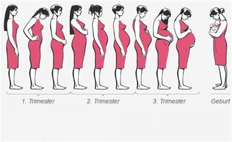 eisprung wann 25 b 228 sta schwangerschaftsverlauf id 233 erna p 229