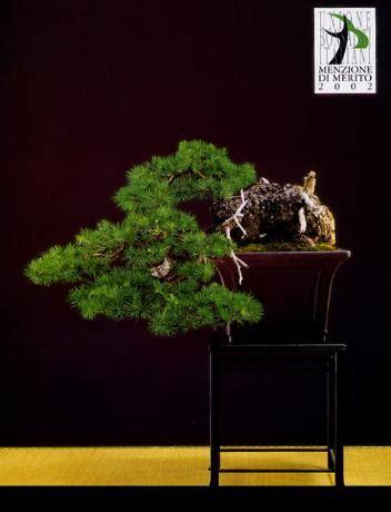 ubi lecco circolo bonsai lecco