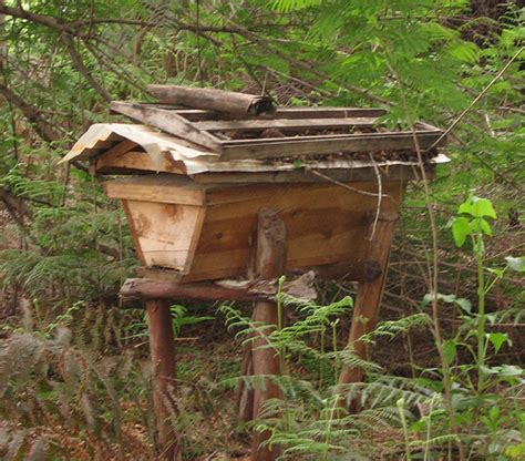 top bar hive design 5 things you didn t know about top bar hives