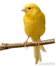 Canary electromagnetically aware the canary syndrome