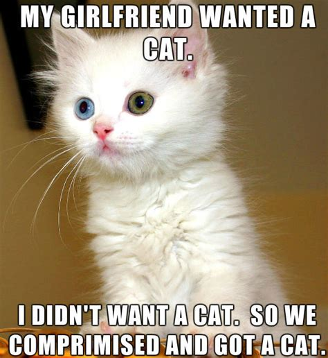 Kitten Meme - my girlfriend wanted a cat weknowmemes