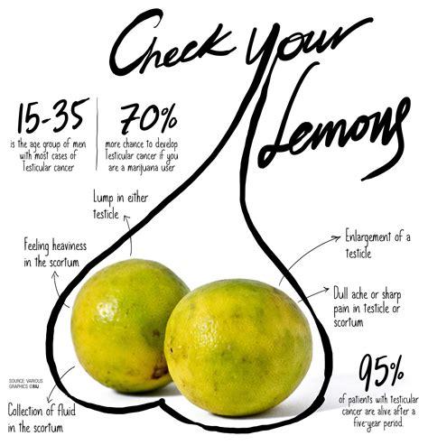 checking for testicular cancer diagram check your lemons testicular cancer