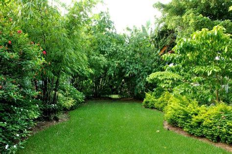 tropical landscape garden design miami knoll landscape bamboo retreat tropical miami by knoll landscape
