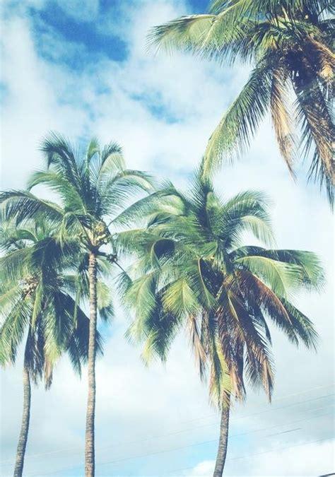 summer vibes palm trees hd 15 zomerse achtergronden voor je telefoon