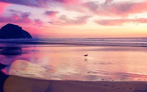 beach wallpaper for macbook air mv56 sunset beach bird red orange nature sea bokeh