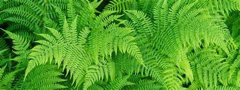 piante ricadenti da interno piante ricadenti da interno nei vasi appesi cose di casa