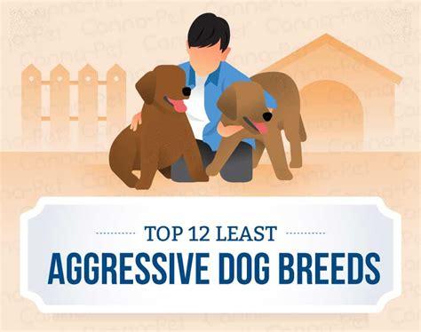least aggressive breeds top 12 least aggressive breeds canna pet 174
