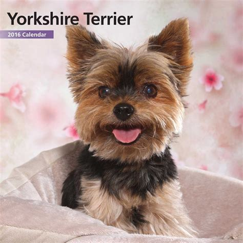 gifts for your yorkie terrier yorkie calendars